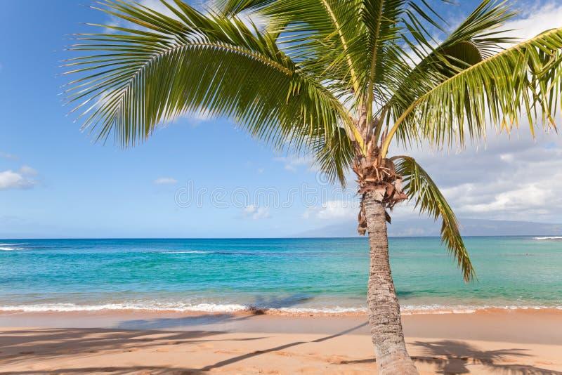 Download Palmier image stock. Image du île, sable, côte, chaud - 17606949