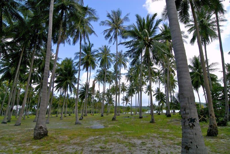 Palmier photos stock