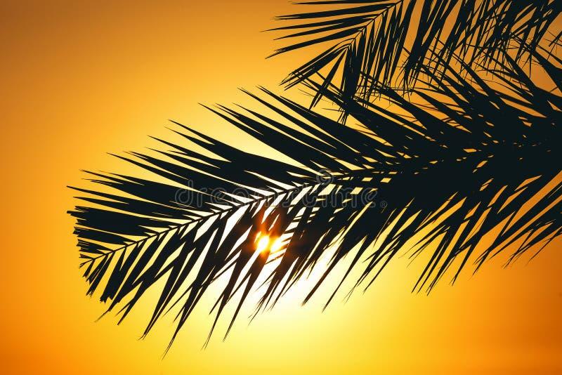 Palmier au coucher du soleil photos stock