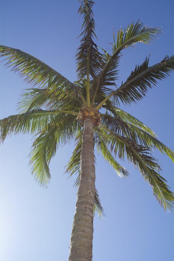 Palmier avec le ciel - la Floride du sud images stock