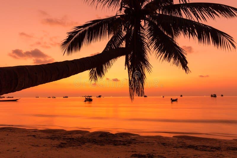 Palmier avec le coucher du soleil tropical orange lumineux image stock