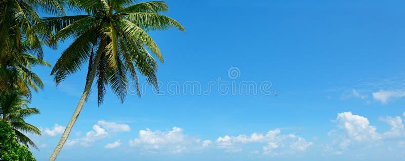 Palmier contre le beau ciel bleu photo libre de droits