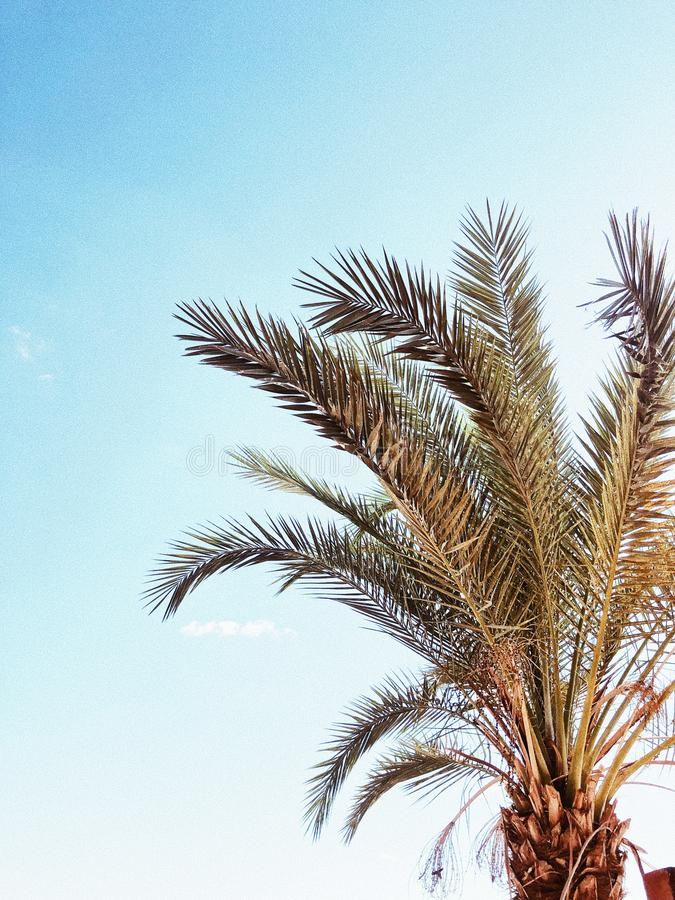 Palmier contre le ciel bleu images stock