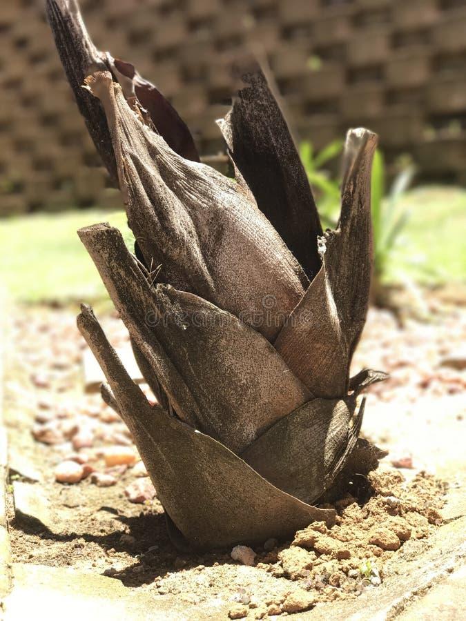 Palmier croissant image libre de droits