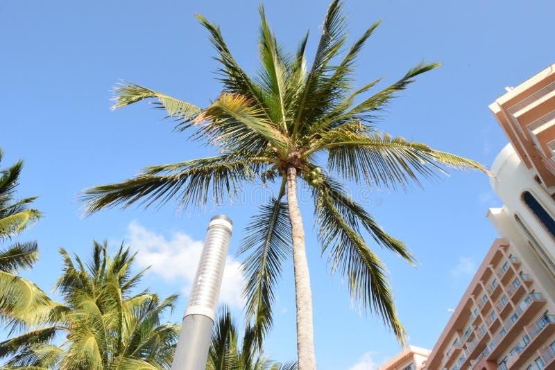 Palmier dans Cancun photo stock