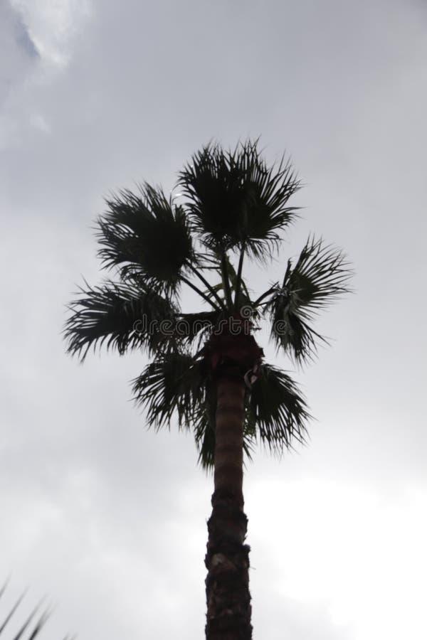Palmier dans le contre-jour avec le ciel nuageux photographie stock