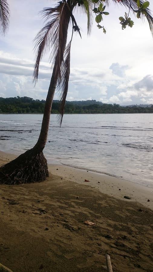 Palmier dans le ³ n de Limà images stock