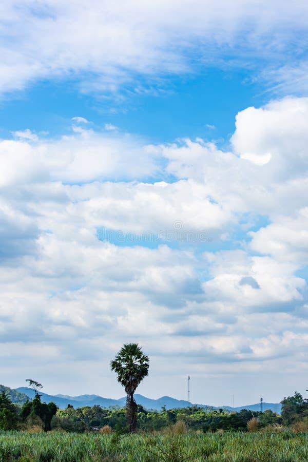Palmier dans le pré les montagnes de fond et le ciel bleu image libre de droits