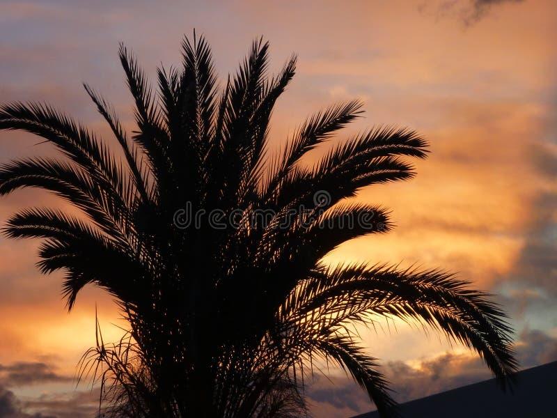 Palmier dans un beau coucher du soleil romantique photographie stock