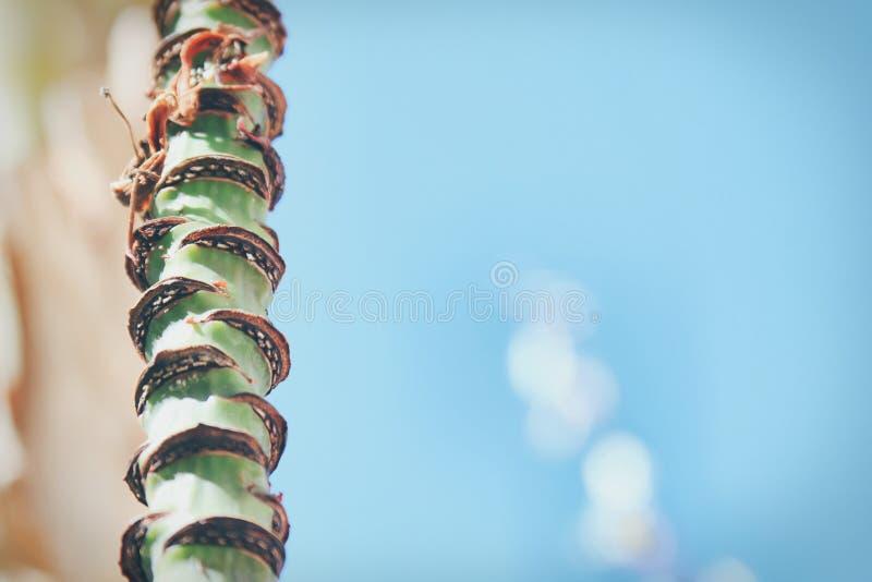 Palmier de banane contre le ciel bleu Fin vers le haut photographie stock