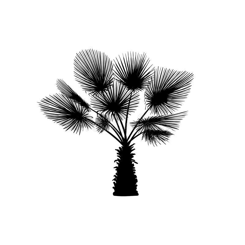 Palmier de croquis de vecteur Palmier tiré par la main de silhouette illustration de vecteur