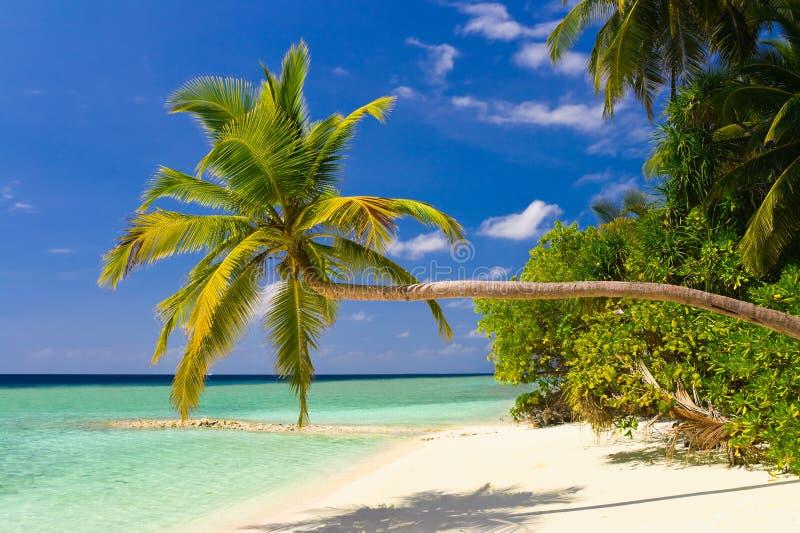 palmier de dépliement de plage tropical photographie stock