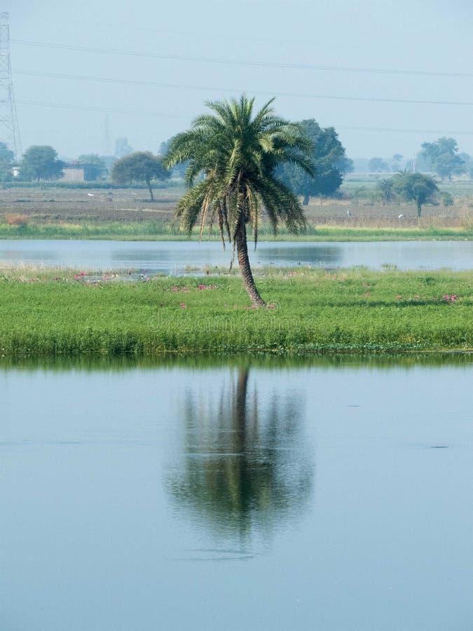 Palmier de date, sa réflexion dans l'eau photographie stock libre de droits
