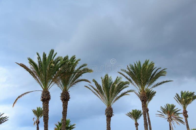 Palmier de datte contre le ciel photographie stock libre de droits