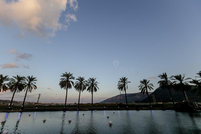 Palmier de palmier-dattier de paume beau haut dans l'environnement de désert dans l'heure d'été photographie stock libre de droits
