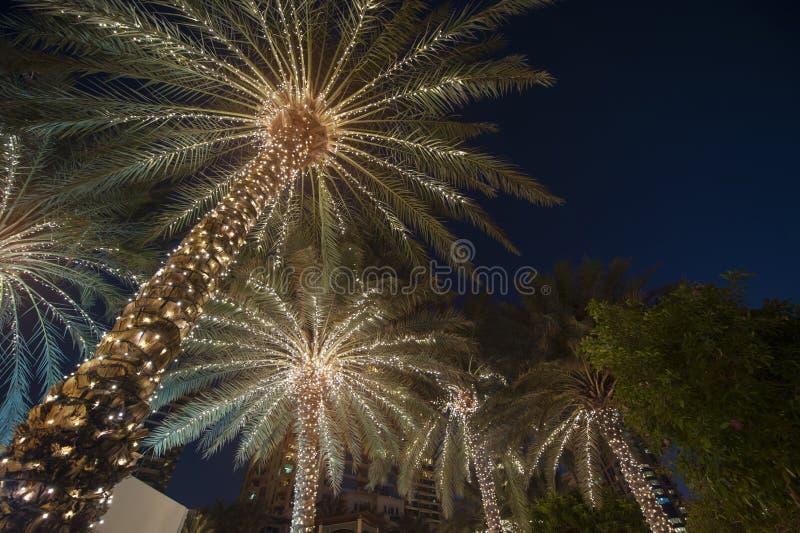 Palmier de fond de Noël images stock
