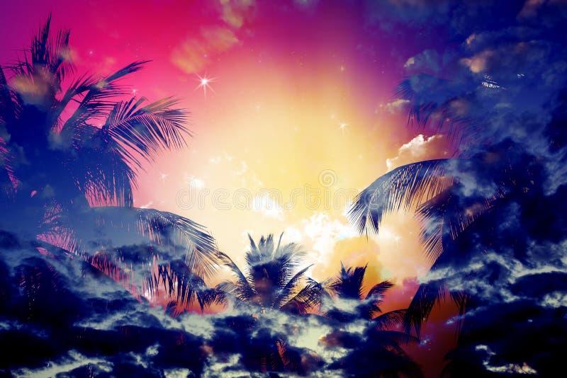 Palmier de noix de coco image libre de droits
