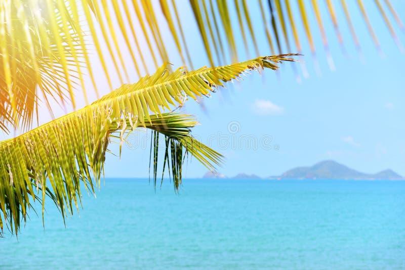 Palmier de noix de coco avec la lumière du soleil sur la mer tropicale de ciel bleu d'océan d'été et de plage d'îles image stock