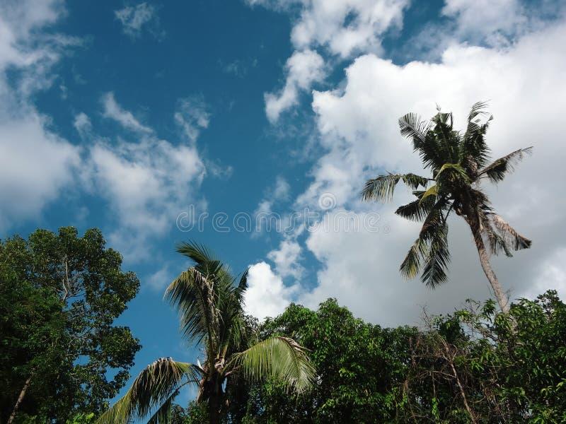 Palmier de noix de coco avec le ciel bleu, beau fond tropical image libre de droits