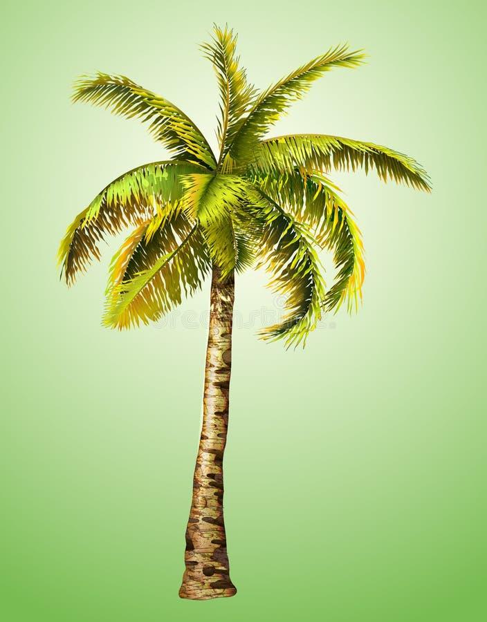 Palmier de noix de coco sur le fond blanc Illustration de vecteur illustration libre de droits