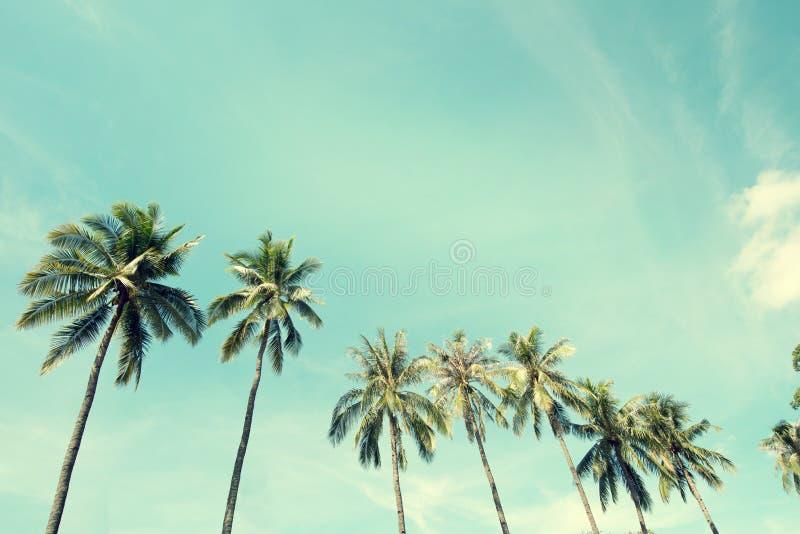 Palmier de noix de coco en bord de la mer photos libres de droits