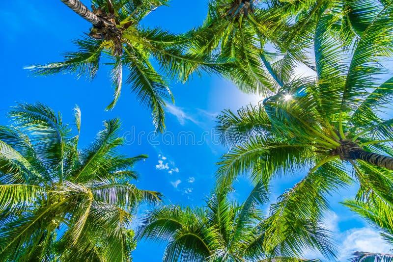 Palmier de noix de coco sur le ciel bleu photo stock - Palmier noix de coco ...