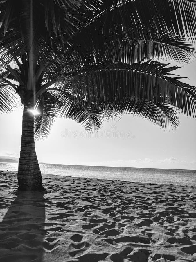 palmier de plage images libres de droits