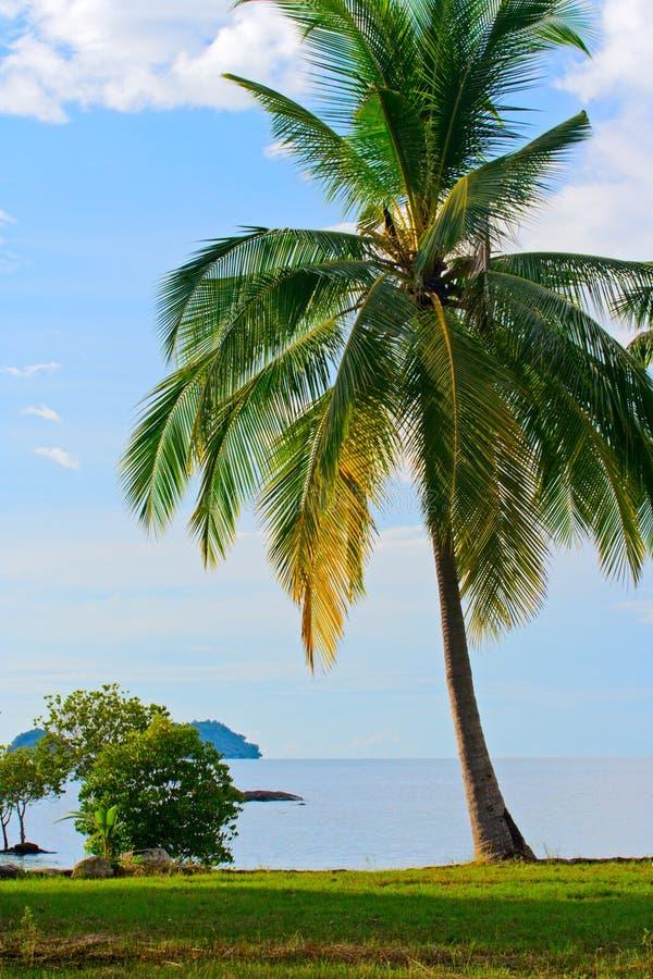 palmier de plage photos libres de droits