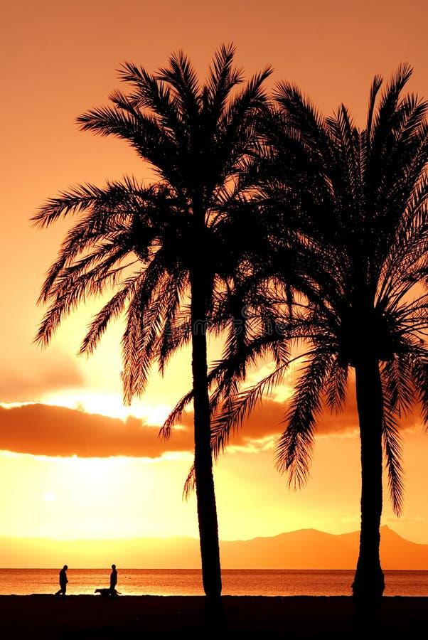 Palmier de vacances d'été photographie stock libre de droits