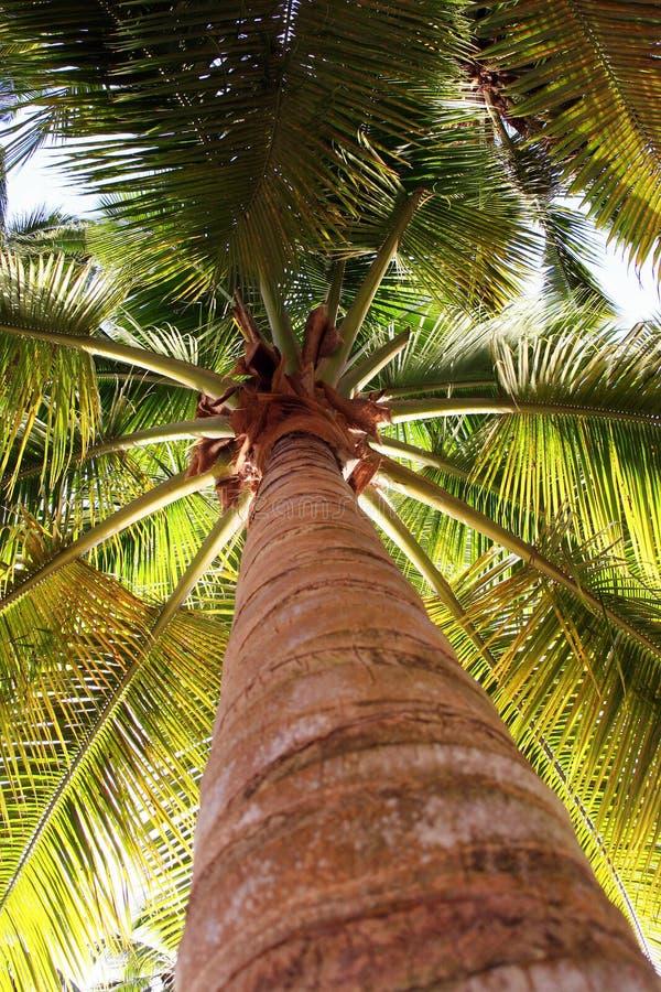 Palmier de vue inférieure image libre de droits