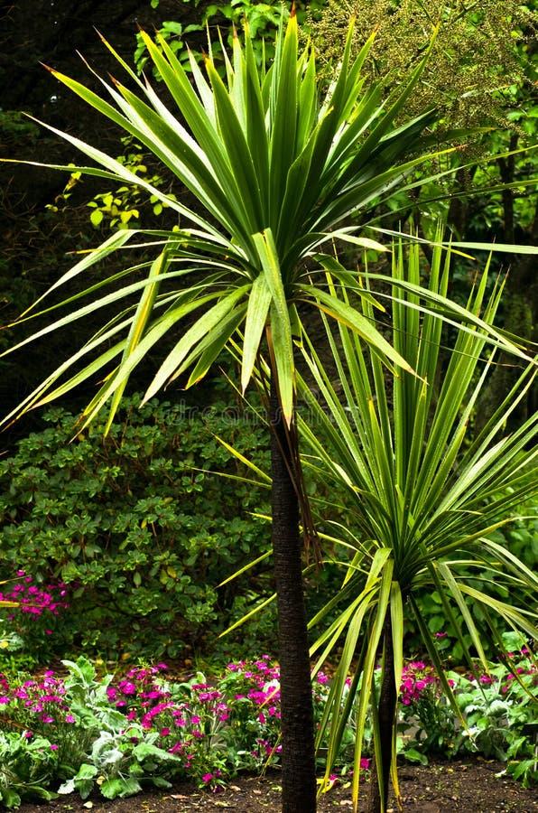 Palmier devant les fleurs magenta photos stock