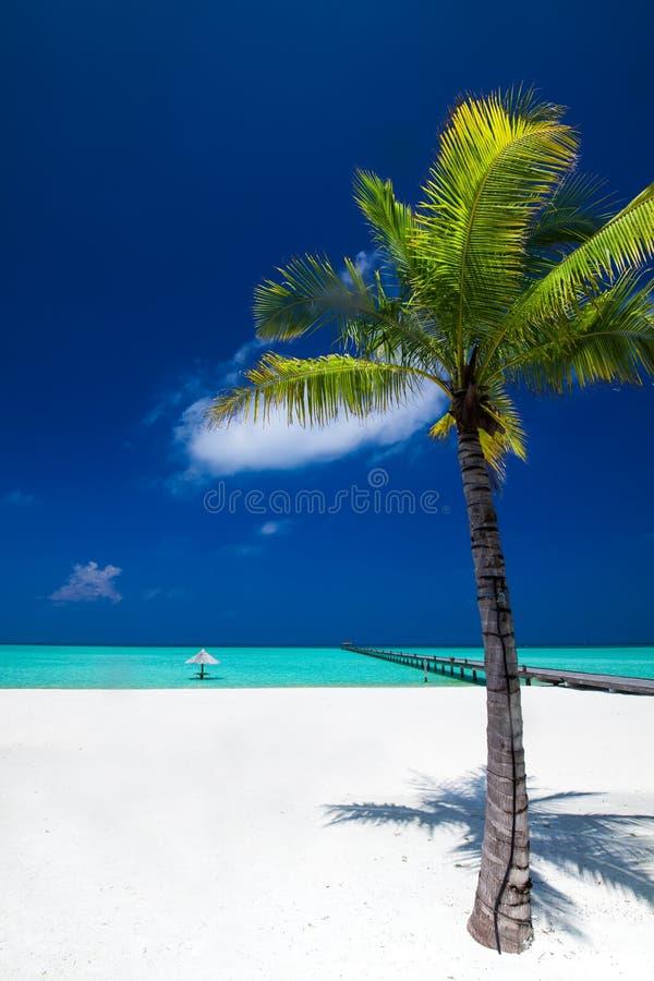 Palmier en plage parfaite tropicale chez les Maldives avec la jetée images libres de droits