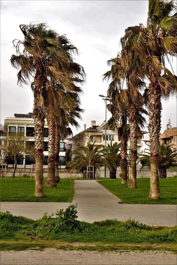 Palmier en stationnement photos stock