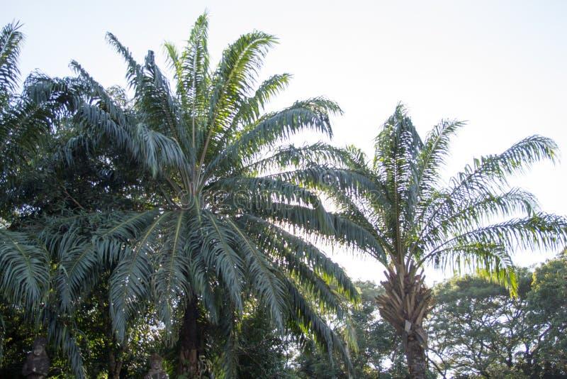 Palmier en stationnement photos libres de droits