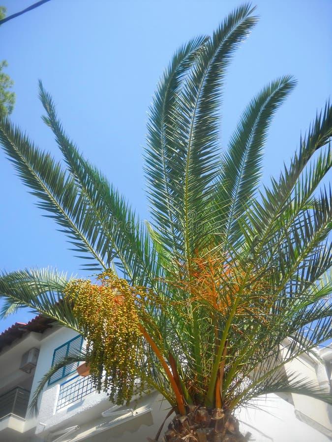 Palmier et abat-jour ou rhytm et rimes photo libre de droits