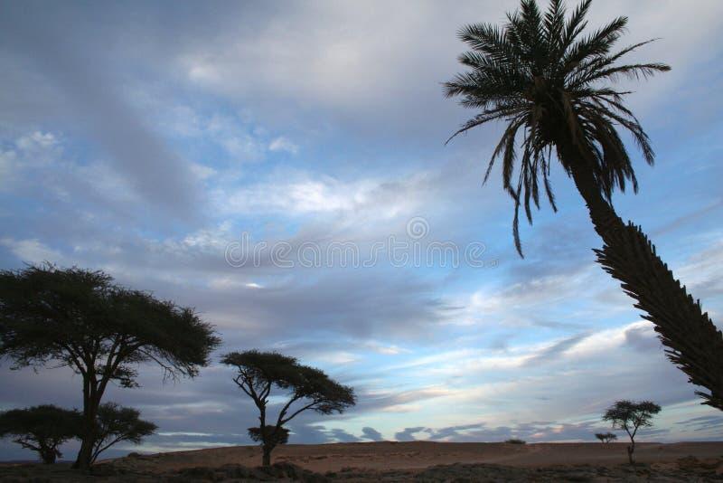 Palmier et acacias dans le désert avec le ciel bleu nuageux image libre de droits