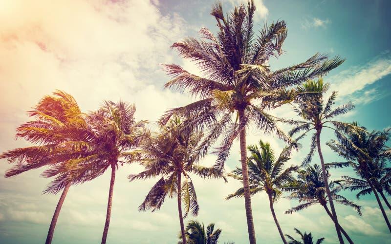 Palmier et ciel de noix de coco sur la plage photo stock - Palmier noix de coco ...