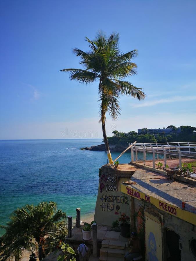 Palmier et la mer photo stock