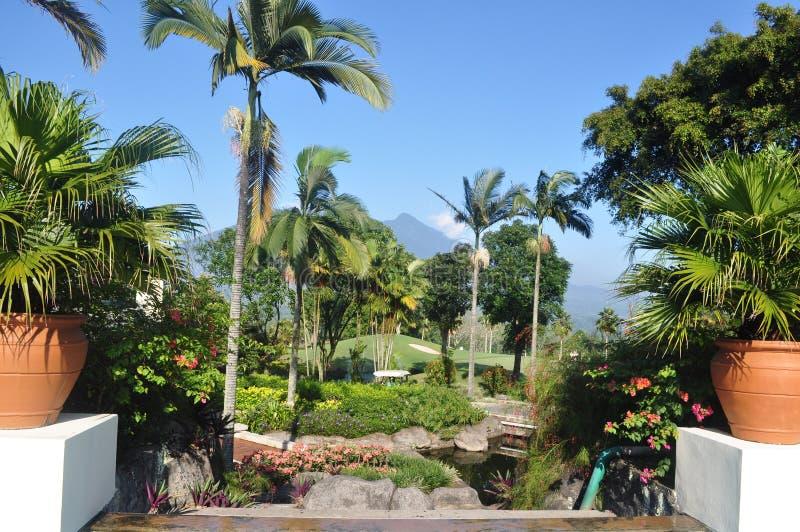 Palmier et la montagne images stock