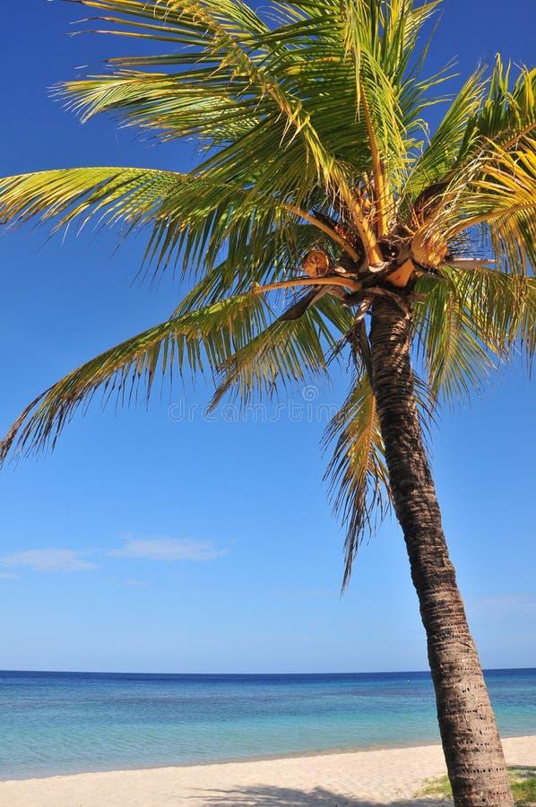Palmier et océan de noix de coco photographie stock