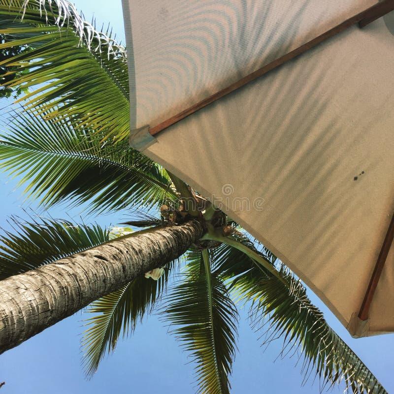 Palmier et parapluie photographie stock libre de droits