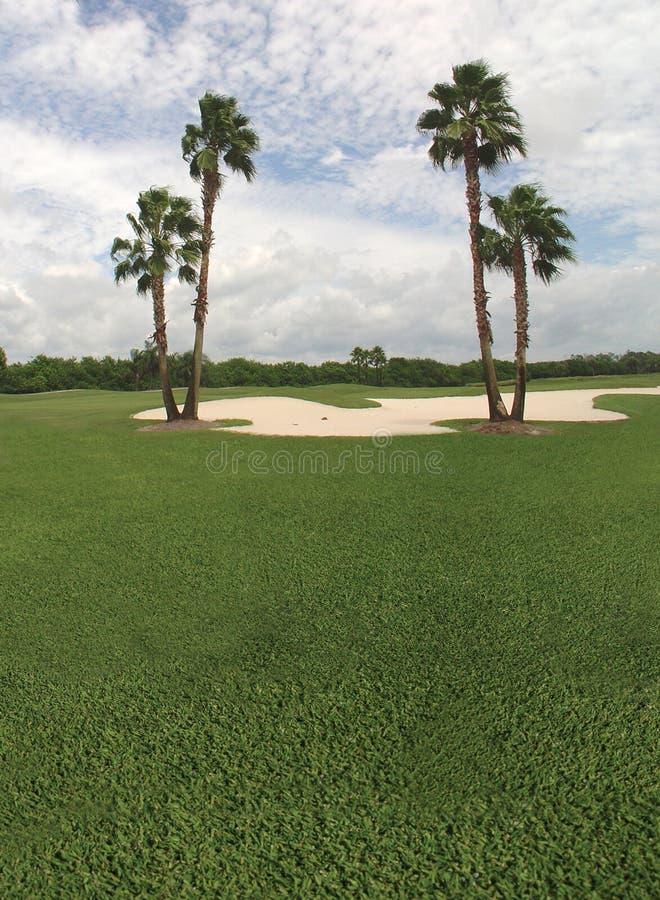 Palmier et terrain de golf image stock