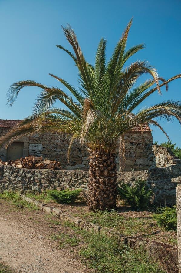 Palmier feuillu devant la vieille maison en pierre image libre de droits
