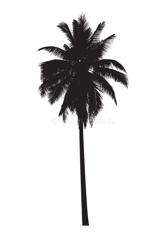 Palmier graphique, vecteur illustration de vecteur