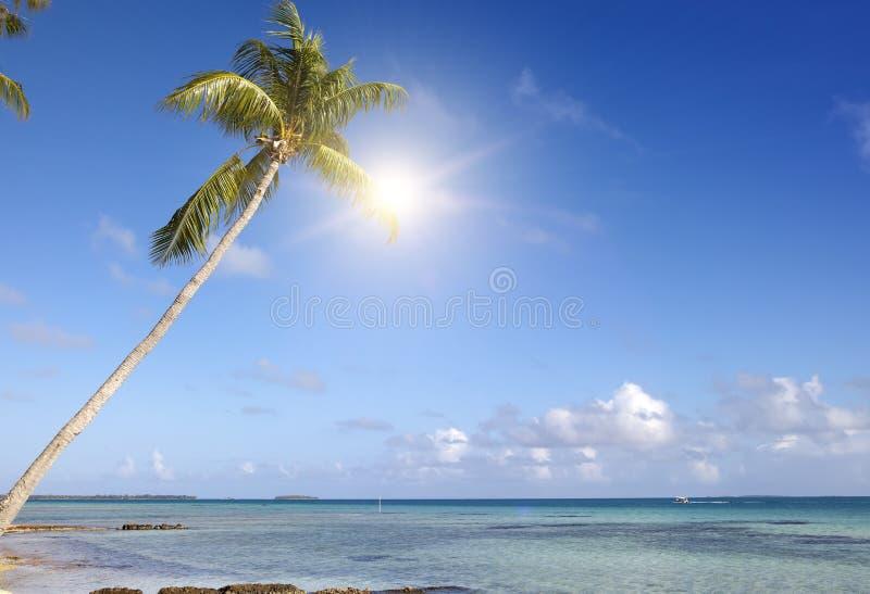 Palmier isolé sur l'île minuscule en mer images stock