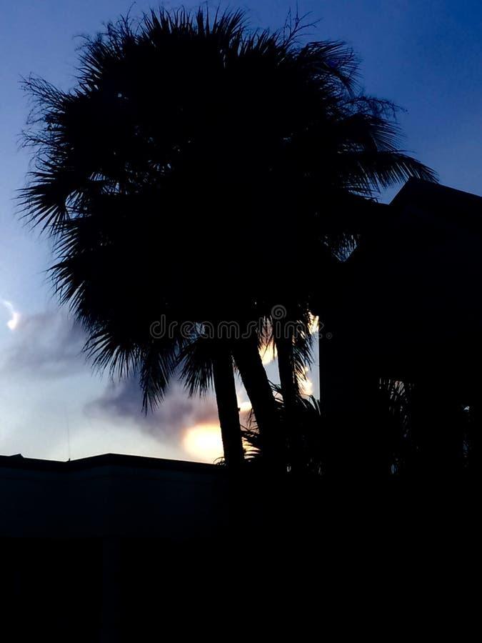 Palmier par le coucher du soleil photos stock