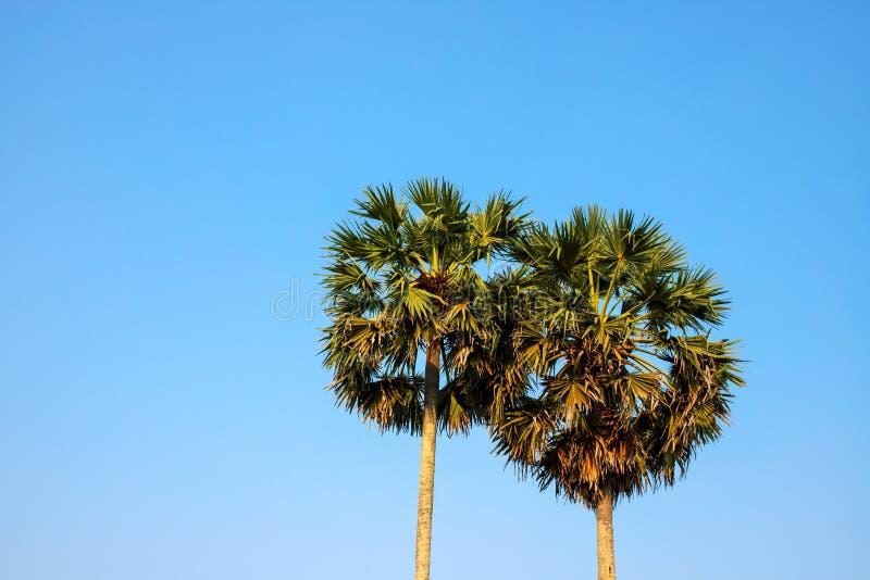 Palmier rond sur le ciel bleu Photo verte de silhouette de paume Paysage pelucheux de paume Vacances d'été exotiques d'île image libre de droits