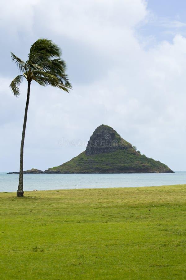 Palmier solitaire, île solitaire image stock
