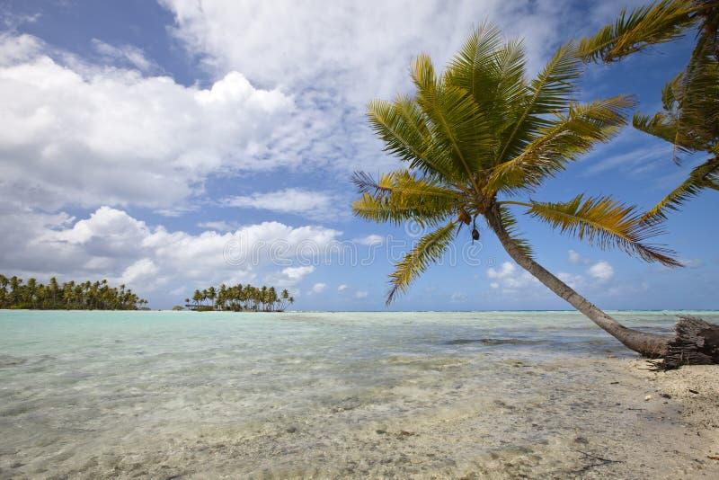 Palmier sur la lagune bleue de l'île de désert photo libre de droits