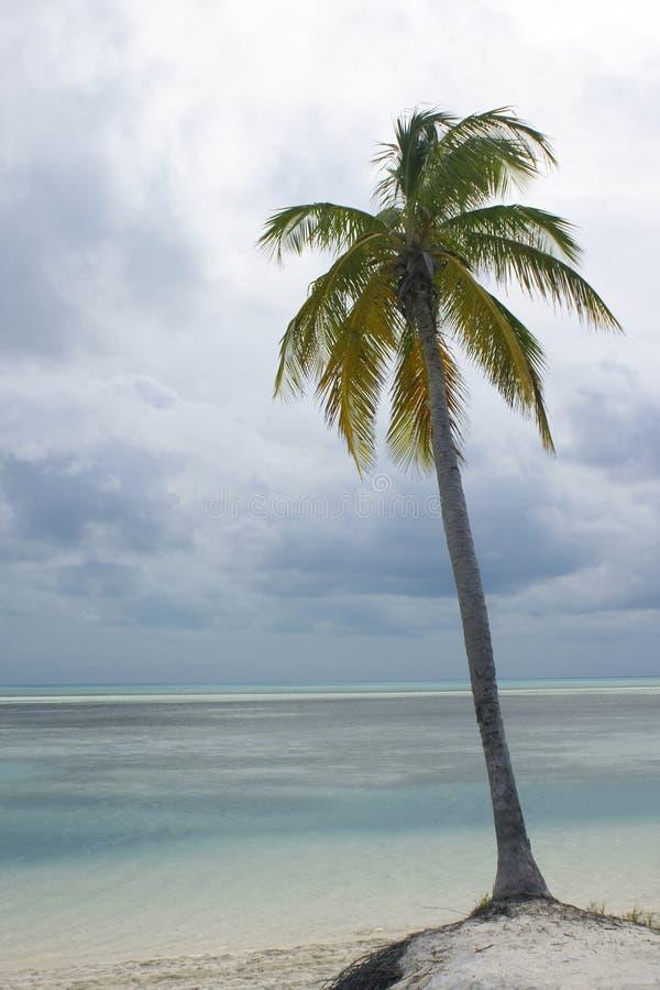 Palmier sur la plage photo stock
